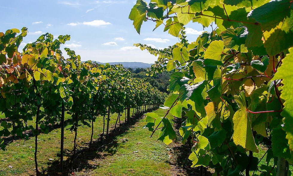 Vineyard Tour, Wine Tasting and Afternoon Tea for Two