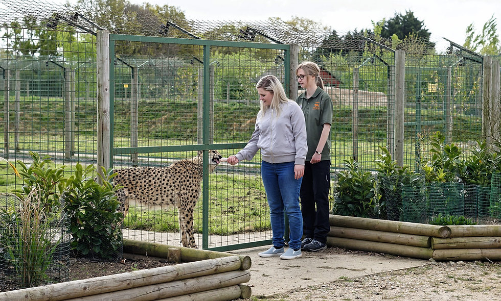 Weekday Luxury Lodge Stay with Dining at Big Cat Sanctuary