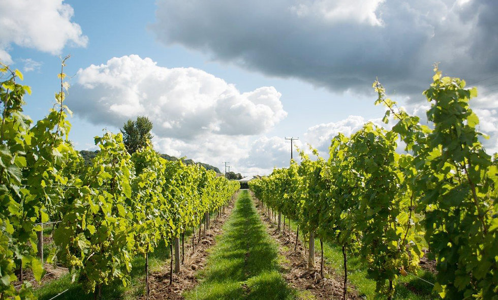 Vineyard Tour and Tasting for Two at Aldwick Estate