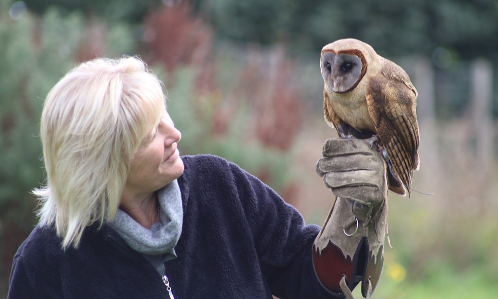 One Hour Private Owl Encounter for Two at Millets Falcony Centre