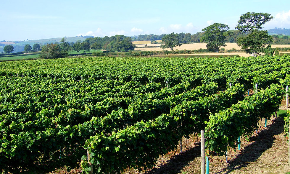 Vineyard Tour and Wine Tasting for Two at Kerry Vale Vineyard