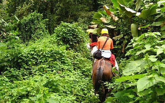 Horseback through the Jungle