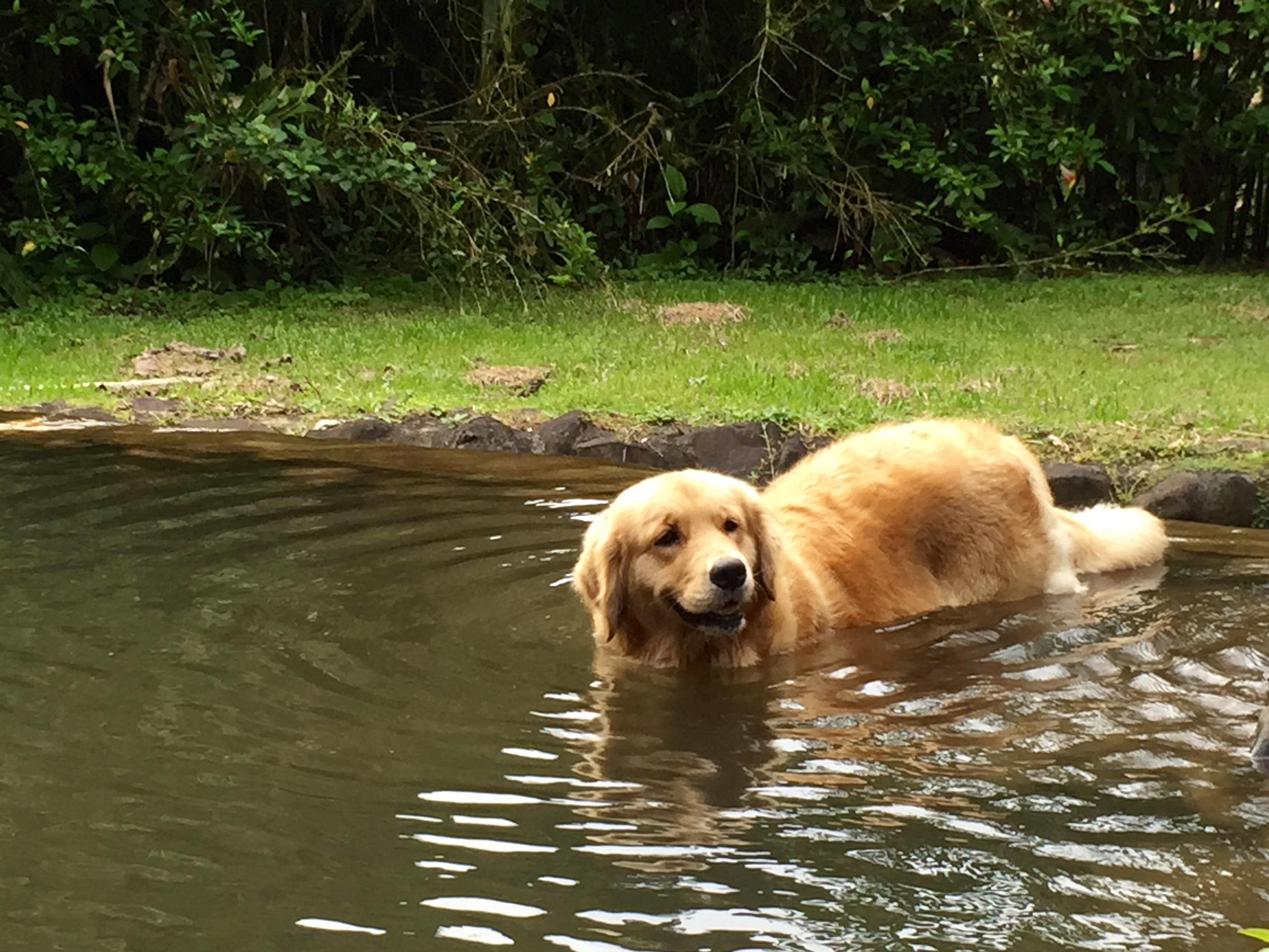 Ginger takes a bath