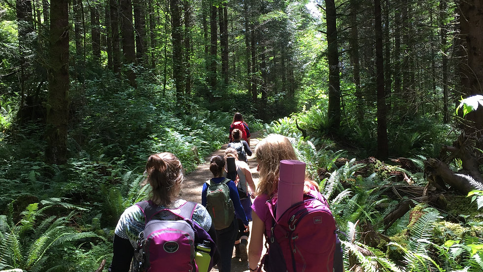 Forest Medicine Hikes