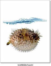 blowfish.jpeg