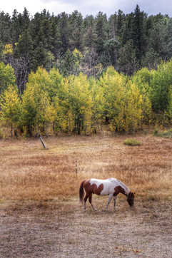 Fall on a horse ranch