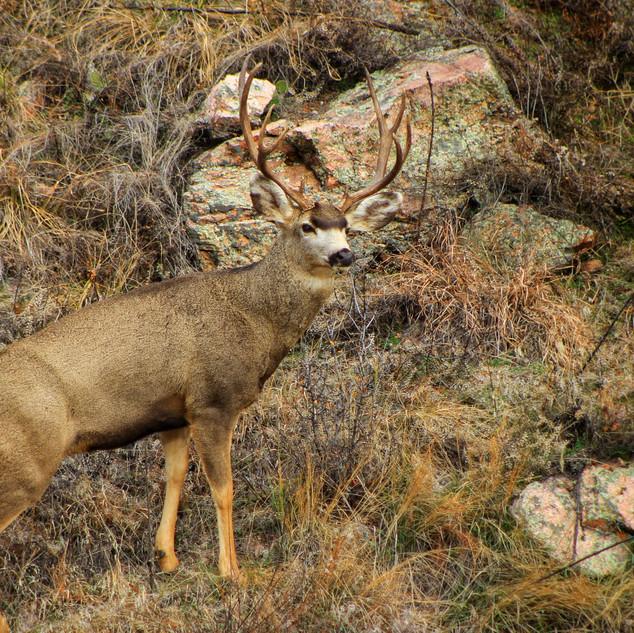 Colorado wild life