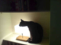 Funny black cat photo warming herself on a lamp