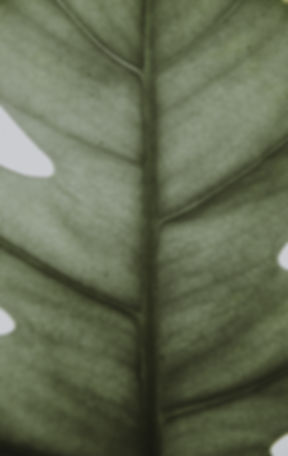 Closeup of Leaf
