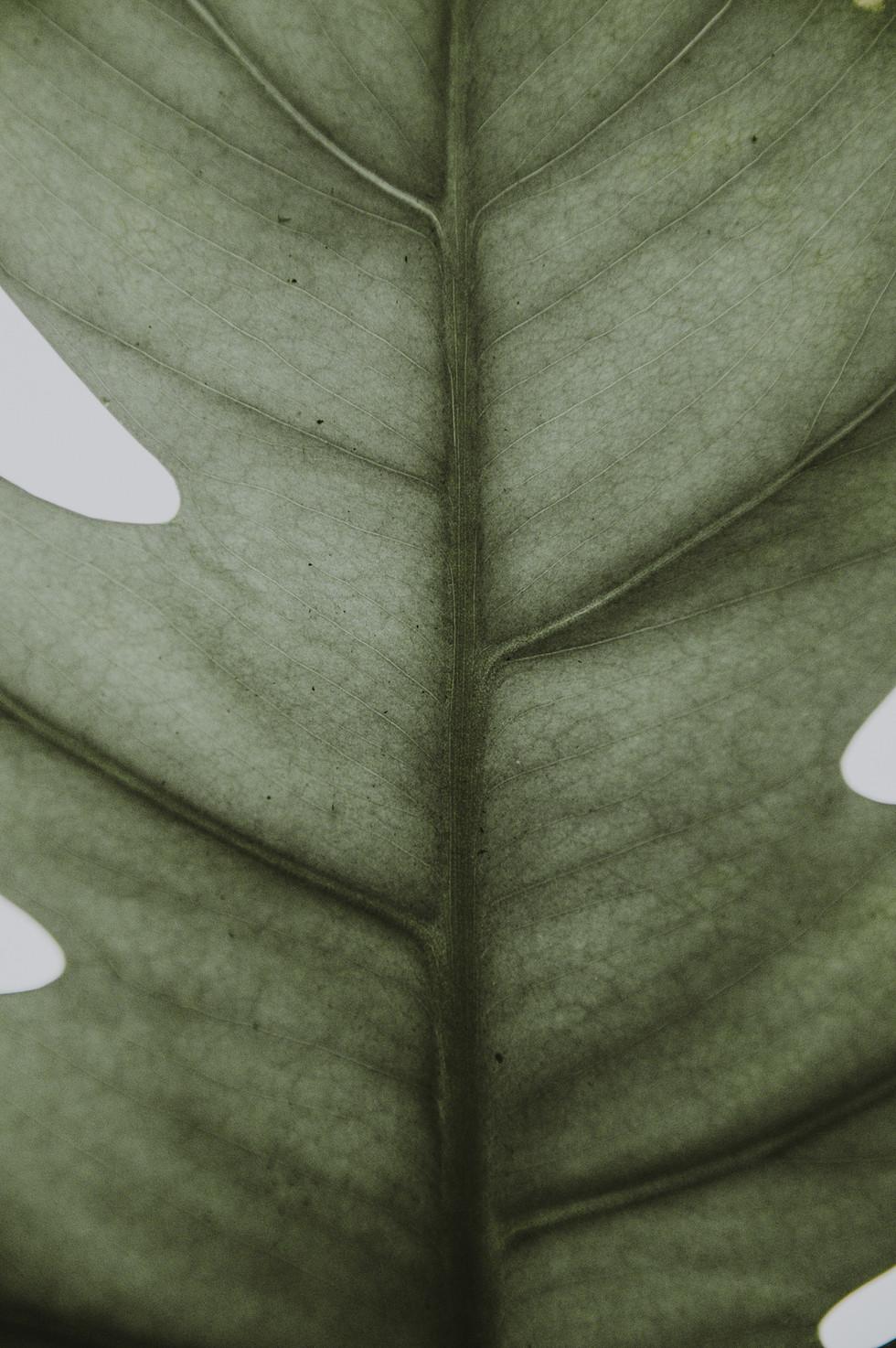 Closeup de folha