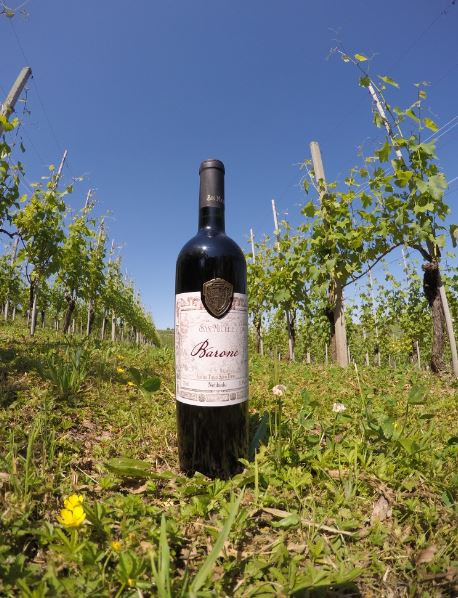 vinho uva nebbiolo