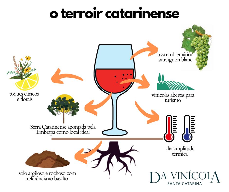 vinho catarinense curiosidades