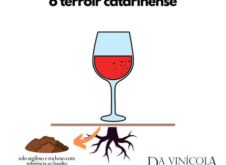 7 CURIOSIDADES SOBRE O VINHO CATARINENSE