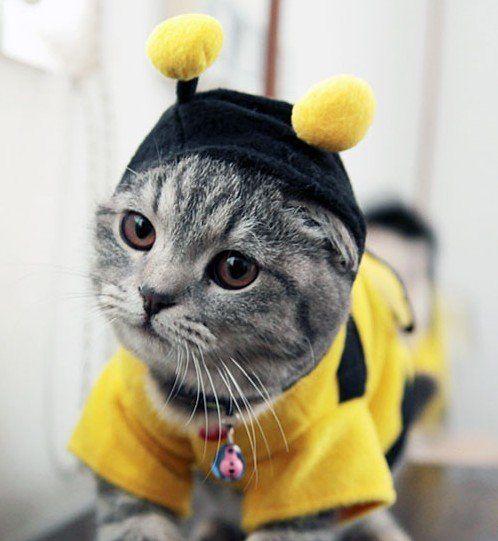 Bumblebee-Cat-Halloween-Costume.jpg