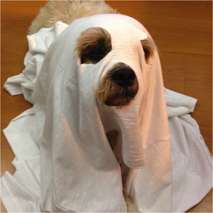 dogs-wearing-silly-halloween-costumes-7