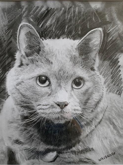 Your Pet's Portrait PKG C-  8.5x11