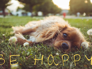 Why BE HAPPY: #happybarks project