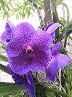 flowerpfiller.jpg