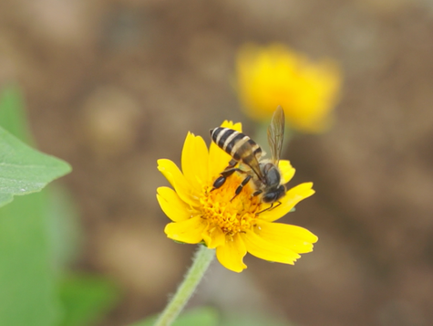 CONTRACT POLLINATION