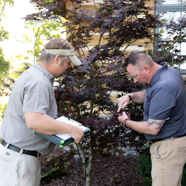 Tree and Shrub Inspection