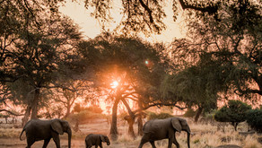 Zambia - More Than a Gem