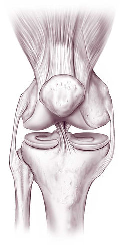 Knee-anatomy-570.jpg