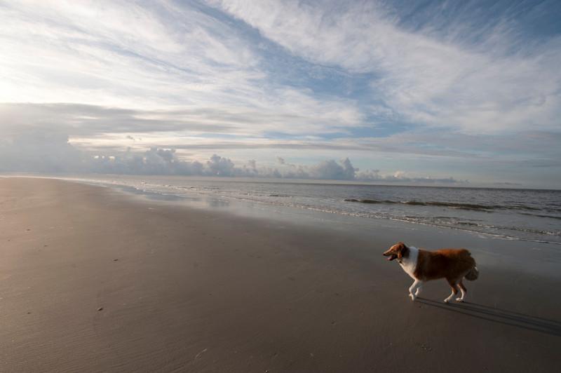 DAYBREAK ON THE BEACH WITH JACKSON
