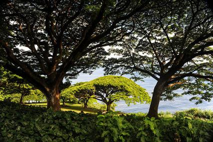 MAUI OCEANSIDE VIEW