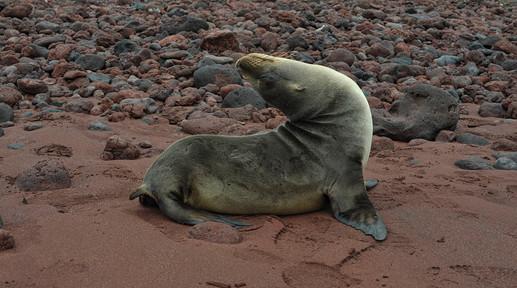 SEAL 1, GALAPAGOS