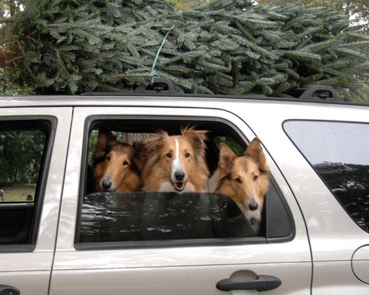 KIP, JACKSON, AND SKY CHRISTMAS IN CAR