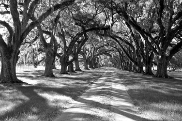 GRAND AVENUE OF THE OAKS
