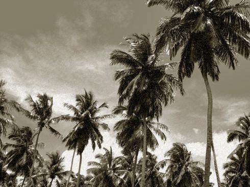 ISLAND PALMS, DR