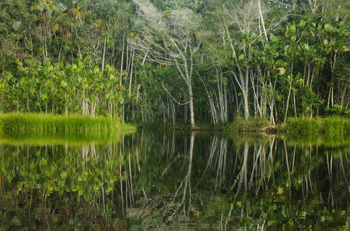 REFLECTIONS IN THE AMAZON JUNGLE