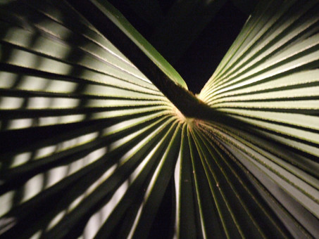 PALM FROND 1