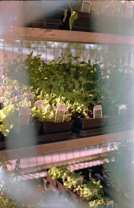 sun-lit herbs, 2020