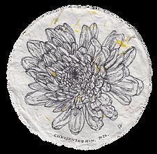 chrysanthemum, 2020.png