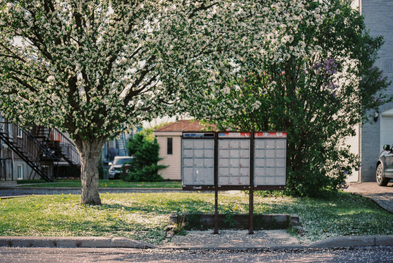 mailbox and flower tree, 2021