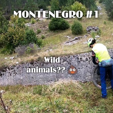 Montenegro #1
