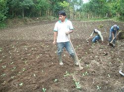 Maya Ixil agriculture