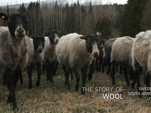 STORY OF WOOL