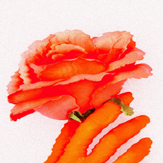 rose first.png