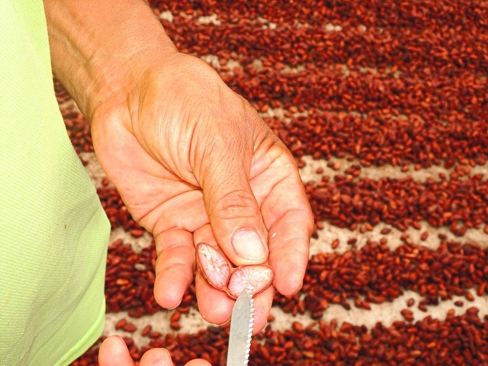 El Deseo Organic Cacao & Fruit Farm