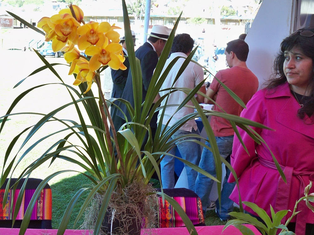 Orchid Cultivation and Export by Ecuagenera
