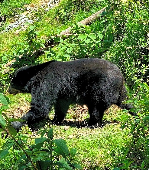 The Trail of the Spectacled Bear