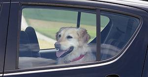 Dog-waiting-inside-a-car.jpg