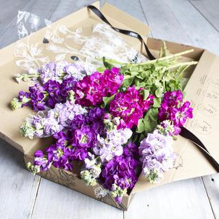 Next Xmas 17 Flower shoot158912.jpg