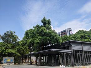 打造一個採光與通風兼具的展覽館