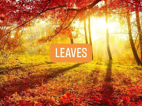 Leaves (BBW Type)