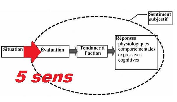 Les composantes du processus émotionnel