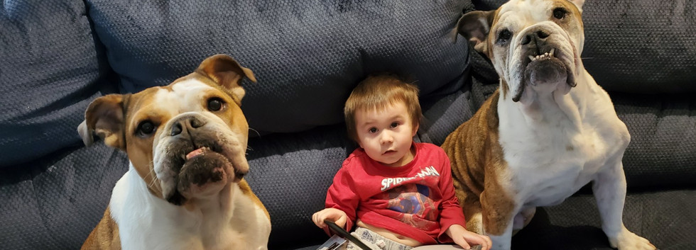 Two english bulldogs and a little boy holding a custom storybook.